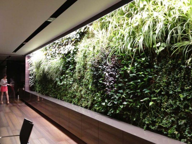 Внутрнее озеленение (5)